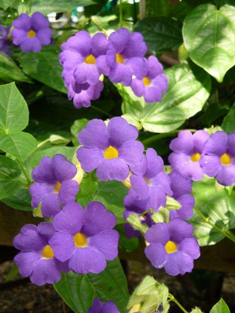 Каталог комнатных цветов и растений